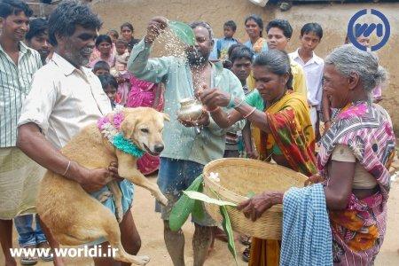 ازدواج دختر ۹ ساله با سگ