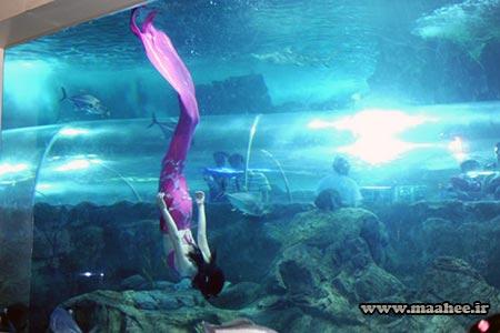 آسیا : آکواریوم عمومی دنیای زیر آب نانجینگ