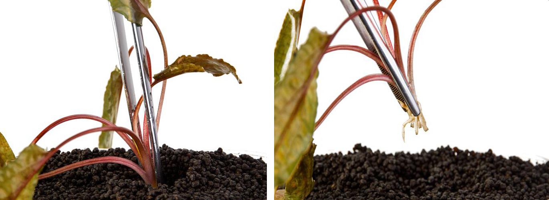 کاشت گیاهان آکواریوم