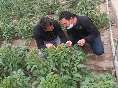 بازدید از گلخانه های گوجه فرنگی شهرستان اسکو (دکتر محمد بشیری)